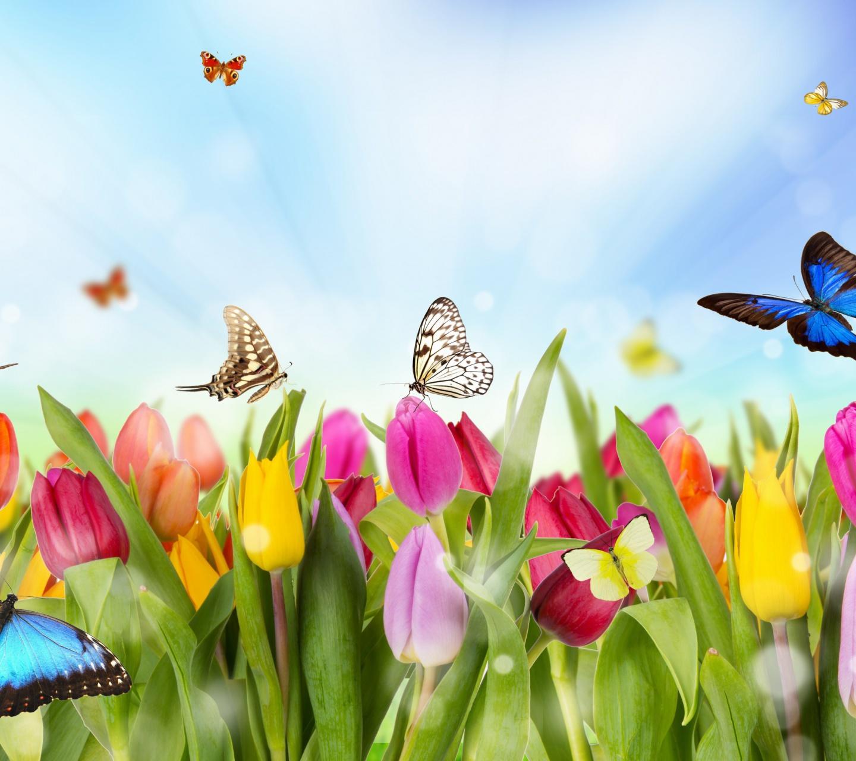 Открытка с тюльпанами и бабочками, сентября прозе