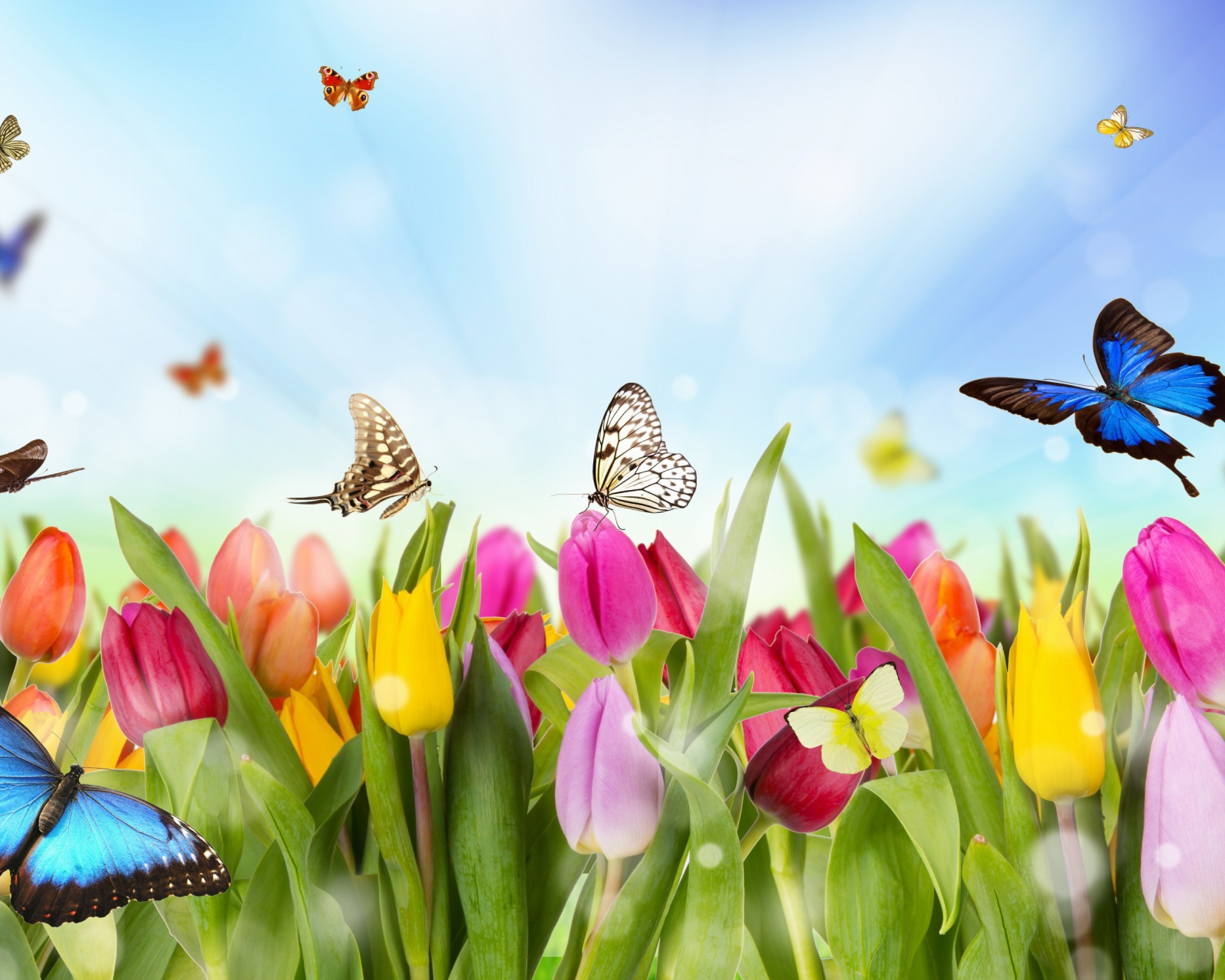 Screenshot №1 pro téma Butterflies and Tulip Field 1600x1280