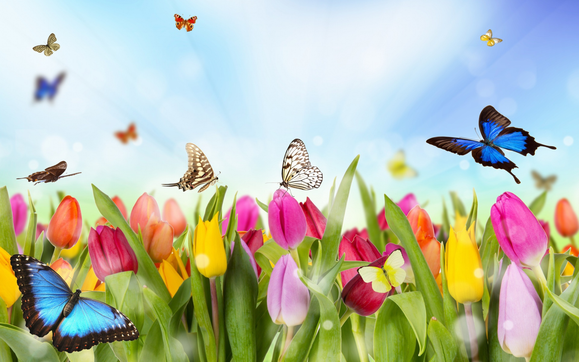 Screenshot №1 pro téma Butterflies and Tulip Field 1920x1200