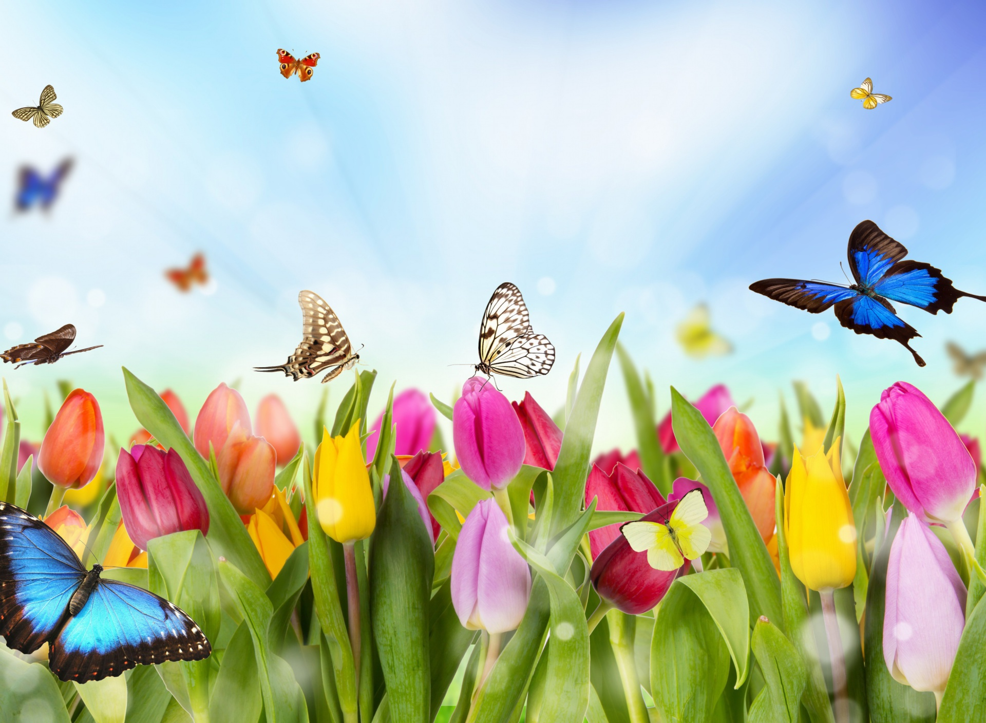 Screenshot №1 pro téma Butterflies and Tulip Field 1920x1408
