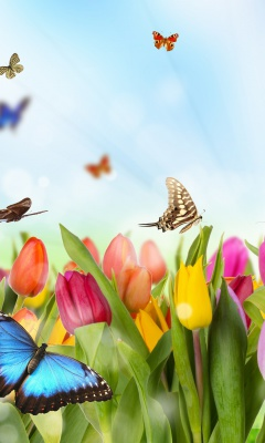 Screenshot №1 pro téma Butterflies and Tulip Field 240x400