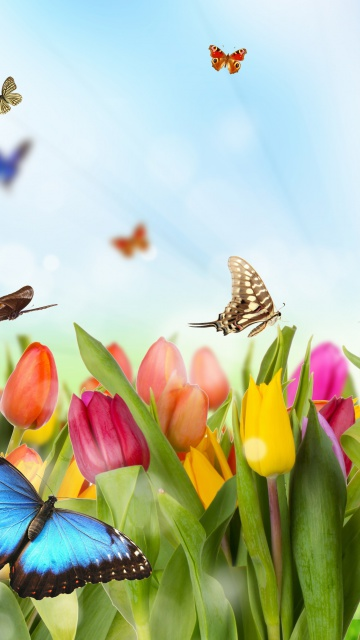 Screenshot №1 pro téma Butterflies and Tulip Field 360x640