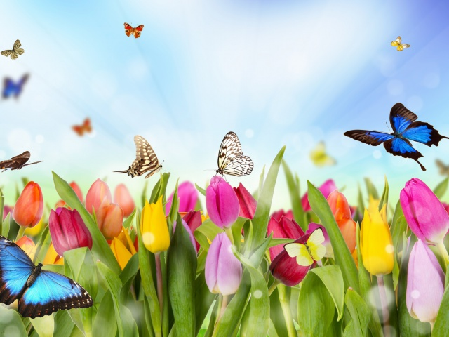 Screenshot №1 pro téma Butterflies and Tulip Field 640x480