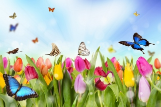 Butterflies and Tulip Field Background for Android, iPhone and iPad