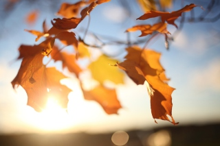 Free Autumn Leaves In Sun Lights Picture for Android, iPhone and iPad
