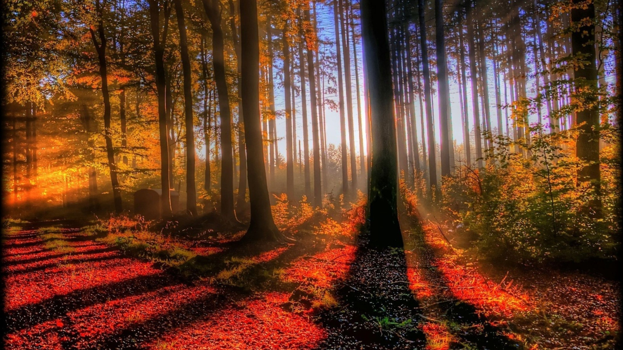 Awesome Fall Scenery