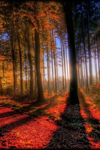 Awesome Fall Scenery para Huawei G7300