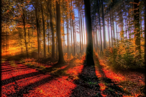 Awesome Fall Scenery para LG E400 Optimus L3