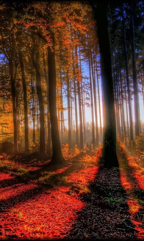 Awesome Fall Scenery per Nokia Lumia 800