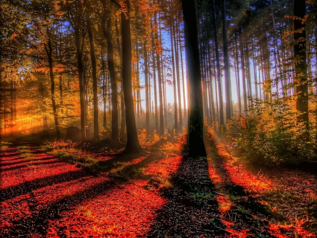 Awesome Fall Scenery para Sony Ericsson XPERIA X8
