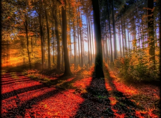 Awesome Fall Scenery Background for Android, iPhone and iPad
