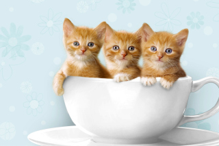 Ginger Kitten In Cup Picture for Android, iPhone and iPad
