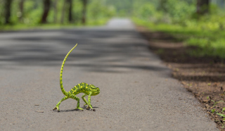 Free Chameleon Walk Picture for Android, iPhone and iPad