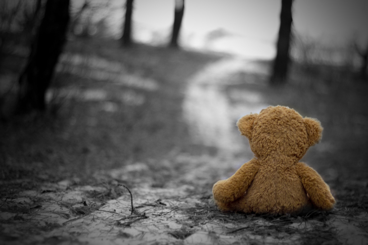 Sfondi Lonely Bear
