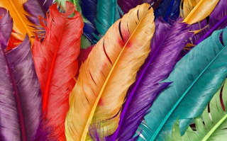 Colored Feathers Background for Android, iPhone and iPad