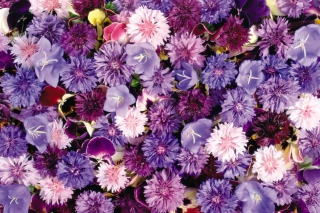 Floral Carpet Wallpaper for Android, iPhone and iPad