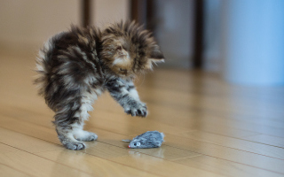 Funny Kitten Playing With Toy Mouse Wallpaper for Android, iPhone and iPad