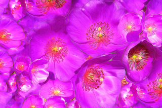 Drawn Purple Flowers Wallpaper for Fullscreen Desktop 1024x768