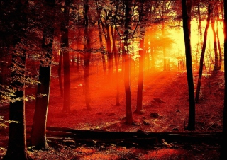 Kostenloses Sun Shining Through Trees Wallpaper für Android, iPhone und iPad