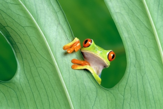Little Frog Picture for Widescreen Desktop PC 1920x1080 Full HD