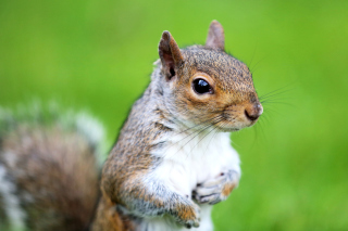 Squirrel Background for Fullscreen Desktop 1280x1024