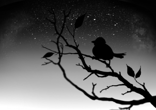 Black Bird Wallpaper for Android, iPhone and iPad