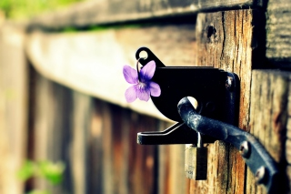 Flowers on the fence Background for Android, iPhone and iPad