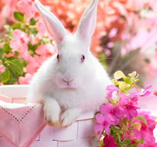 Spring Rabbit Background for iPad Air