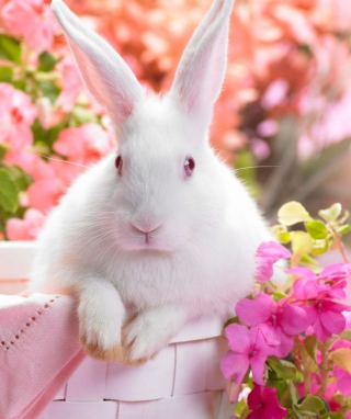 Spring Rabbit Background for Nokia Lumia 925