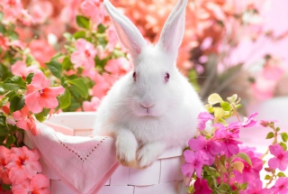 Spring Rabbit Wallpaper for Android, iPhone and iPad