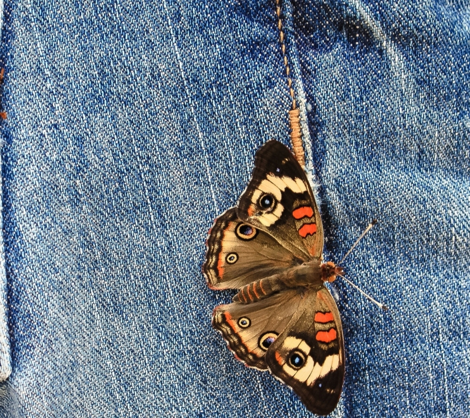 Butterfly Likes Jeans screenshot #1 960x854