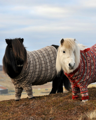 Shetland Ponies Picture for iPhone 6 Plus