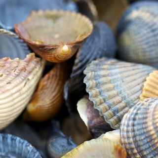 Free Macro Shells Picture for 1024x1024