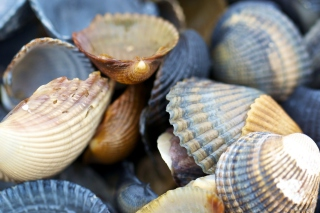 Free Macro Shells Picture for Android, iPhone and iPad