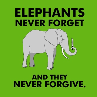 Elephants Never Forget sfondi gratuiti per 1024x1024