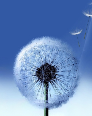 Blowball Wallpaper for Nokia Asha 306