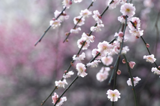 Spring Bloom Background for Android, iPhone and iPad