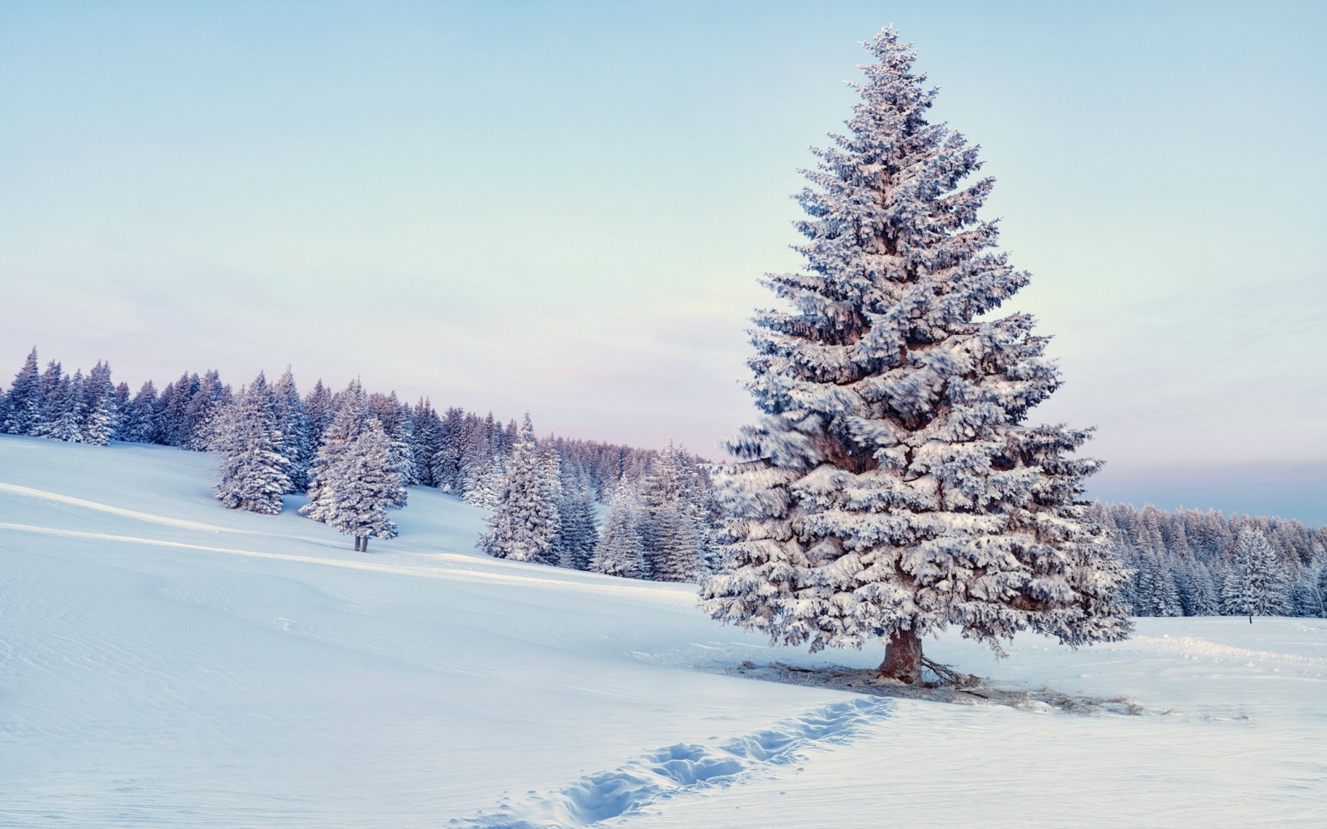 Screenshot №1 pro téma Snowy Forest Winter Scenery 1920x1200