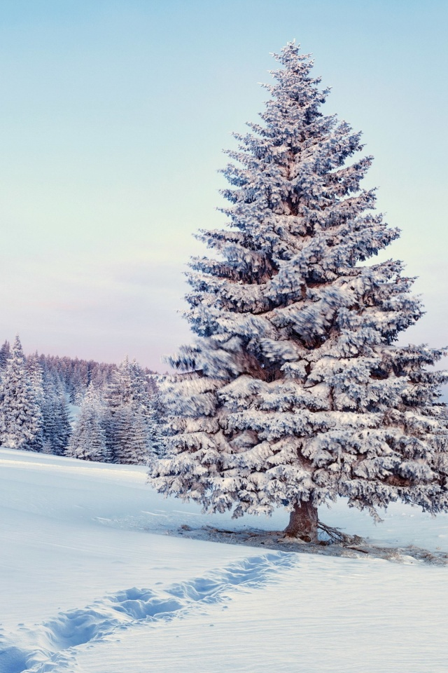 Screenshot №1 pro téma Snowy Forest Winter Scenery 640x960