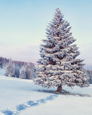 Snowy Forest Winter Scenery Picture for 320x480