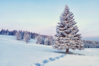 Kostenloses Snowy Forest Winter Scenery Wallpaper für Fullscreen Desktop 1280x1024