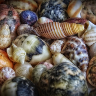 Colorful Shells Picture for 1024x1024