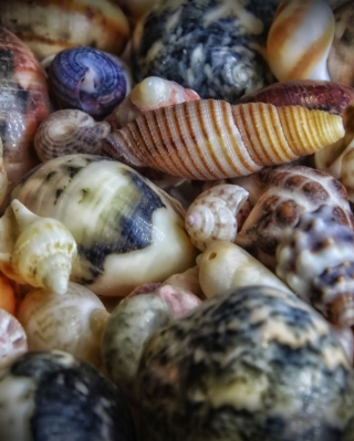 Colorful Shells sfondi gratuiti per Nokia Lumia 925