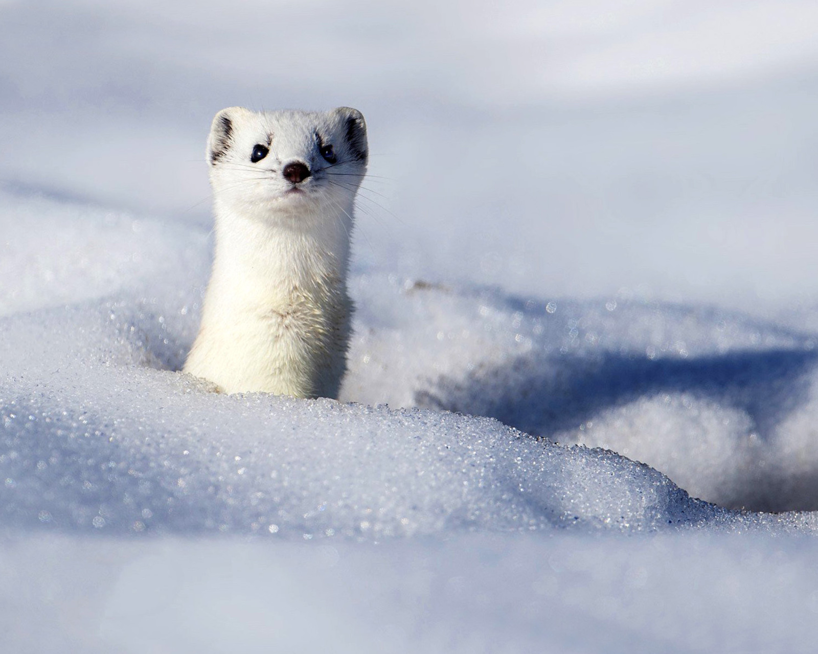 Stoat screenshot #1 1600x1280
