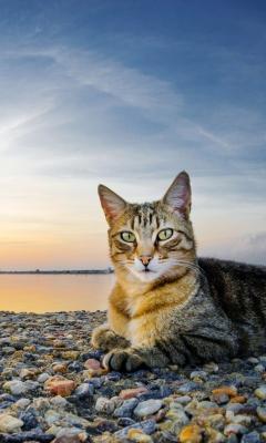 Cat On Beach para Samsung GT-S5230 Star