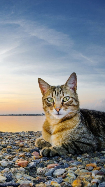 Cat On Beach for Nokia C5-05