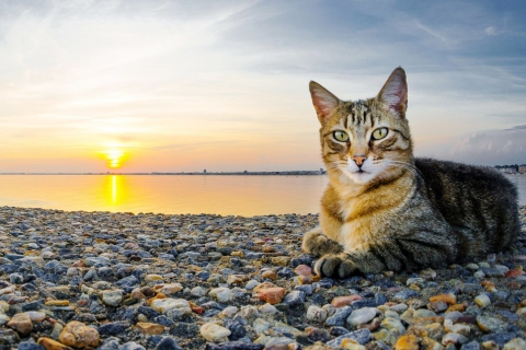 Cat On Beach para Samsung S5367 Galaxy Y TV
