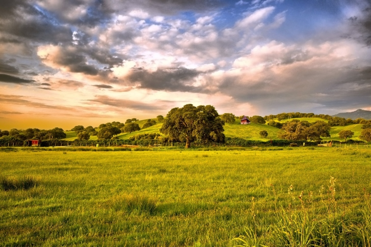 Green Countryside wallpaper