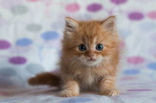 Pretty Kitten Background for Android, iPhone and iPad