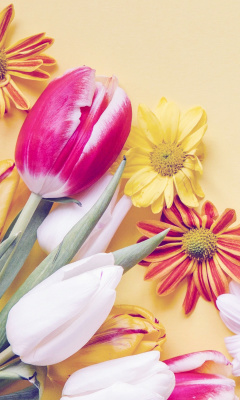 Screenshot №1 pro téma Spring tulips on yellow background 240x400